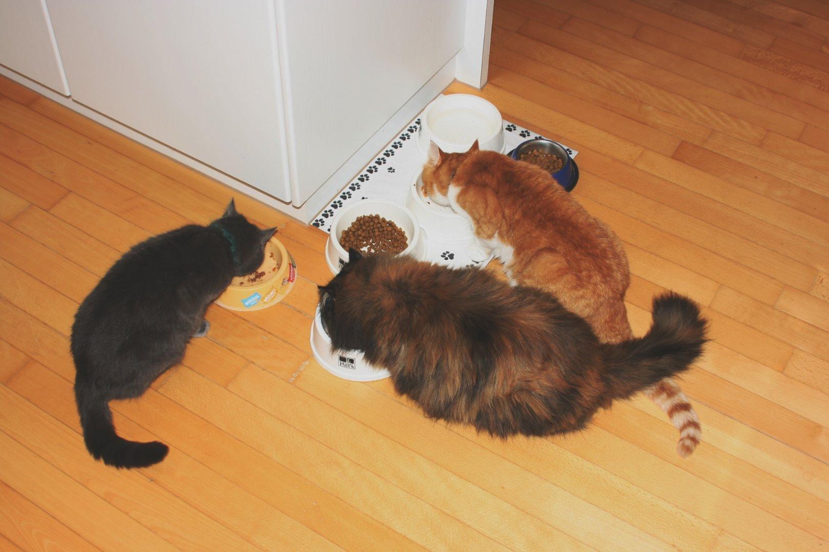 katzen nach sechs wochen trennen