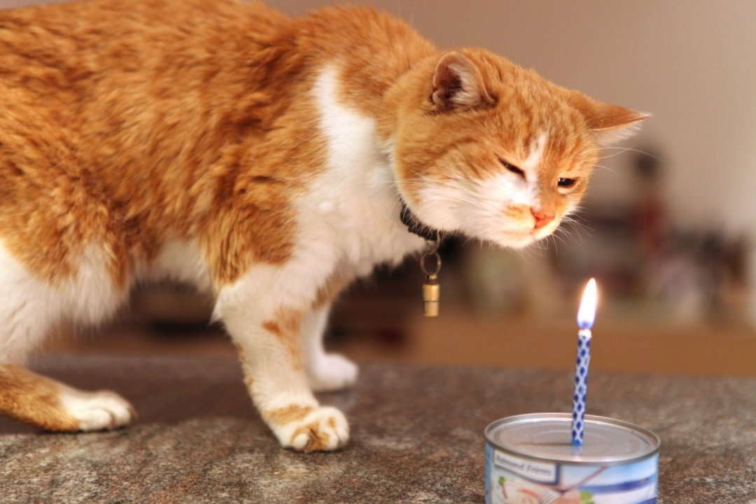 Mauzis 20. Geburtstag